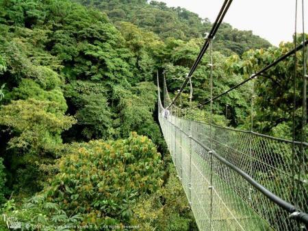 Entdecken Sie den Monteverde Nationalpark und unternehmen Sie eine Wanderung über Hängebrücken