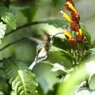 Flora in Quito auf einer Rund Reise durch Ecuador