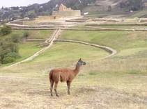 Ein Berg in Ecuador auf einer Rund Reise
