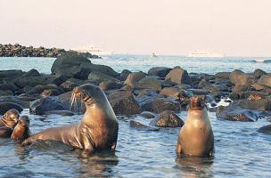 Ecuardor Rundreise Isla de la Plata Seelöwen