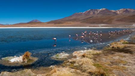 Bereisen Sie das schöne Land Bolivien und seine zahlreichen Lagunen in der Hochebene