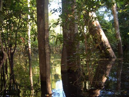 Hoch-und Abseilen Manaus3