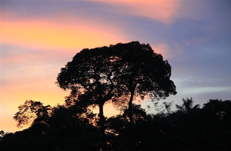 Hoch-und Abseilen Manaus4