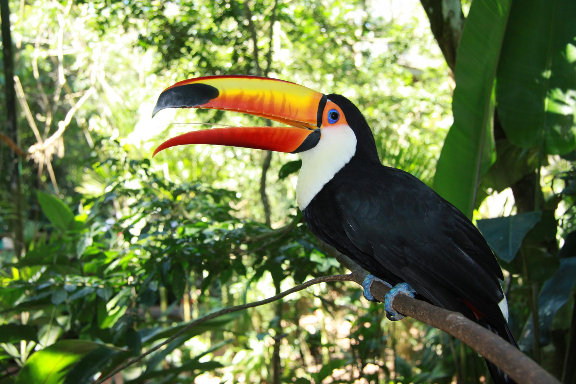 Tukan im Foz Tropicana Bird Park