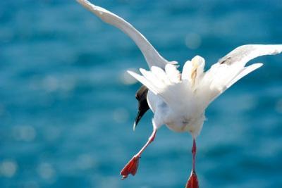 phoca_thumb_l_galbirds23