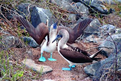 Vogel im Pazifik bei einer Ecuador Galapagos Reise