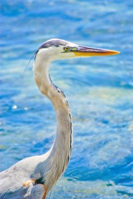 Ein Pelikan auf den Galapagos Inseln bei einer Ecuador Reise