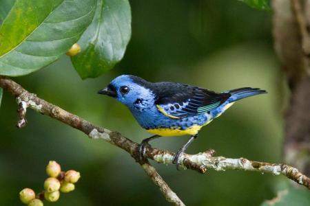 Ein Vogel in der Umgebung der Cristalino Jungle Lodge