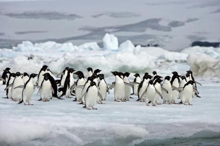 Erleben Sie die Pinguin Kolonien in der Antarktis auf einer Kreuzfahrt in Argentinien