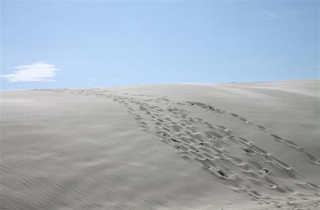 sandboarden5