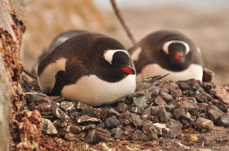 Beobachten Sie die wilden Tiere der Antarktis auf einer ganz besonderen Kreuzfahrt