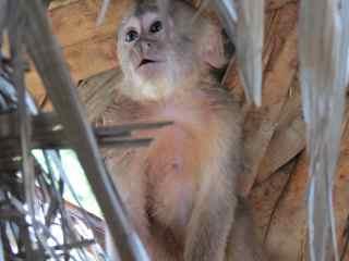 huao area monkey 2_klein