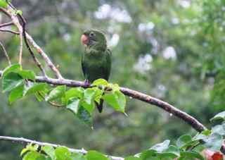 huao area parrot_klein