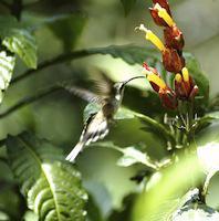 Reise Ecuador Regenwald Yacuma Vogel Aguila Arpia