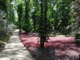 Der botanische Garten in San Felipe bei einer Reise durch Venezuela.