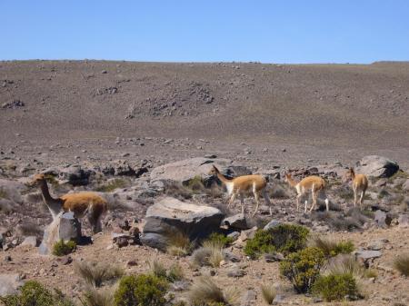 Reisen Sie durch die peruanischen Anden und entdecken Sie die einmalige Natur