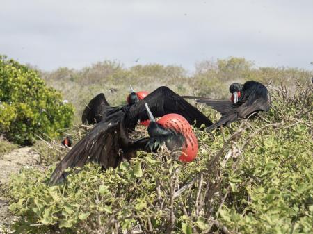 Auf dieser Rundreise entdecken Sie die Natur der Galapagos Inseln