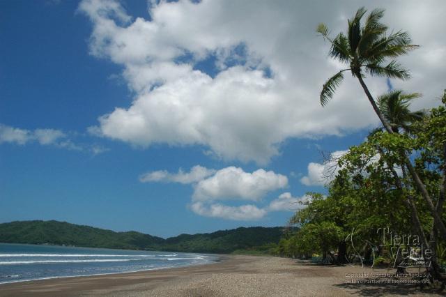 tropical15