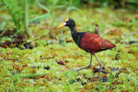 Entdecken Sie die wilden Tiere Costa Ricas auf einer Rundreise mit uns