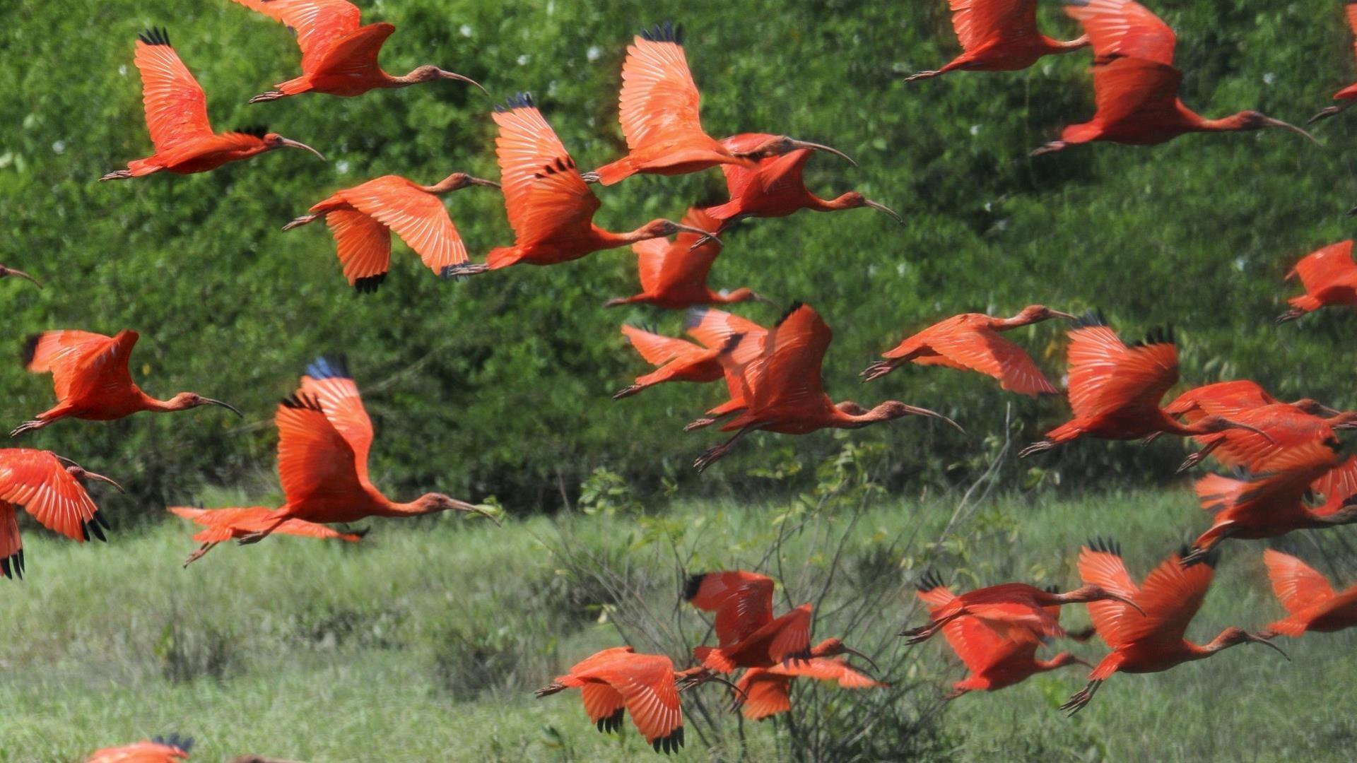 5 Tage Belem & Ilha de Marajo: Ein Vogelschwarm