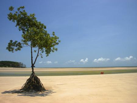 Idyllische Ilha de Marajo