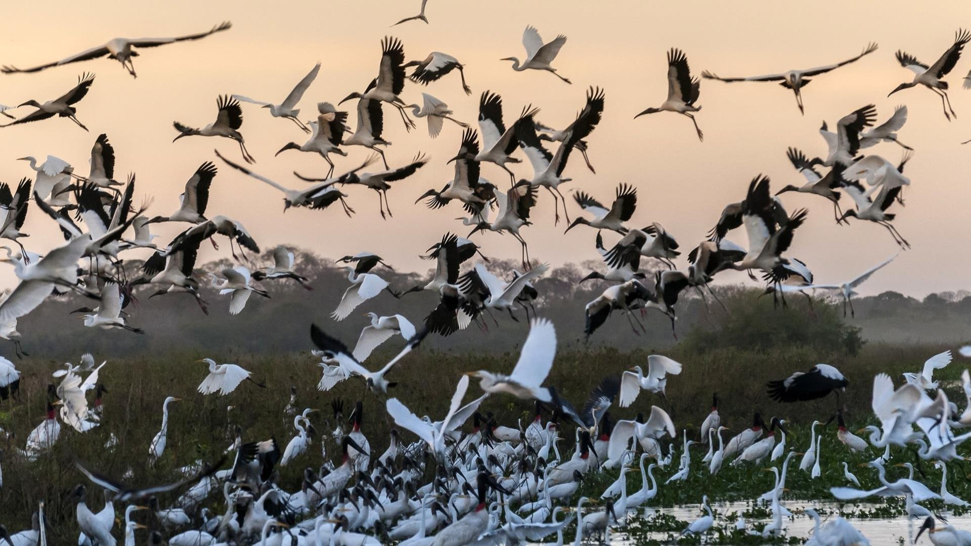 Brasilien Nord Pantanal: 11 Tage Reisebaustein - Natur Highlights in drei Ökosystemen