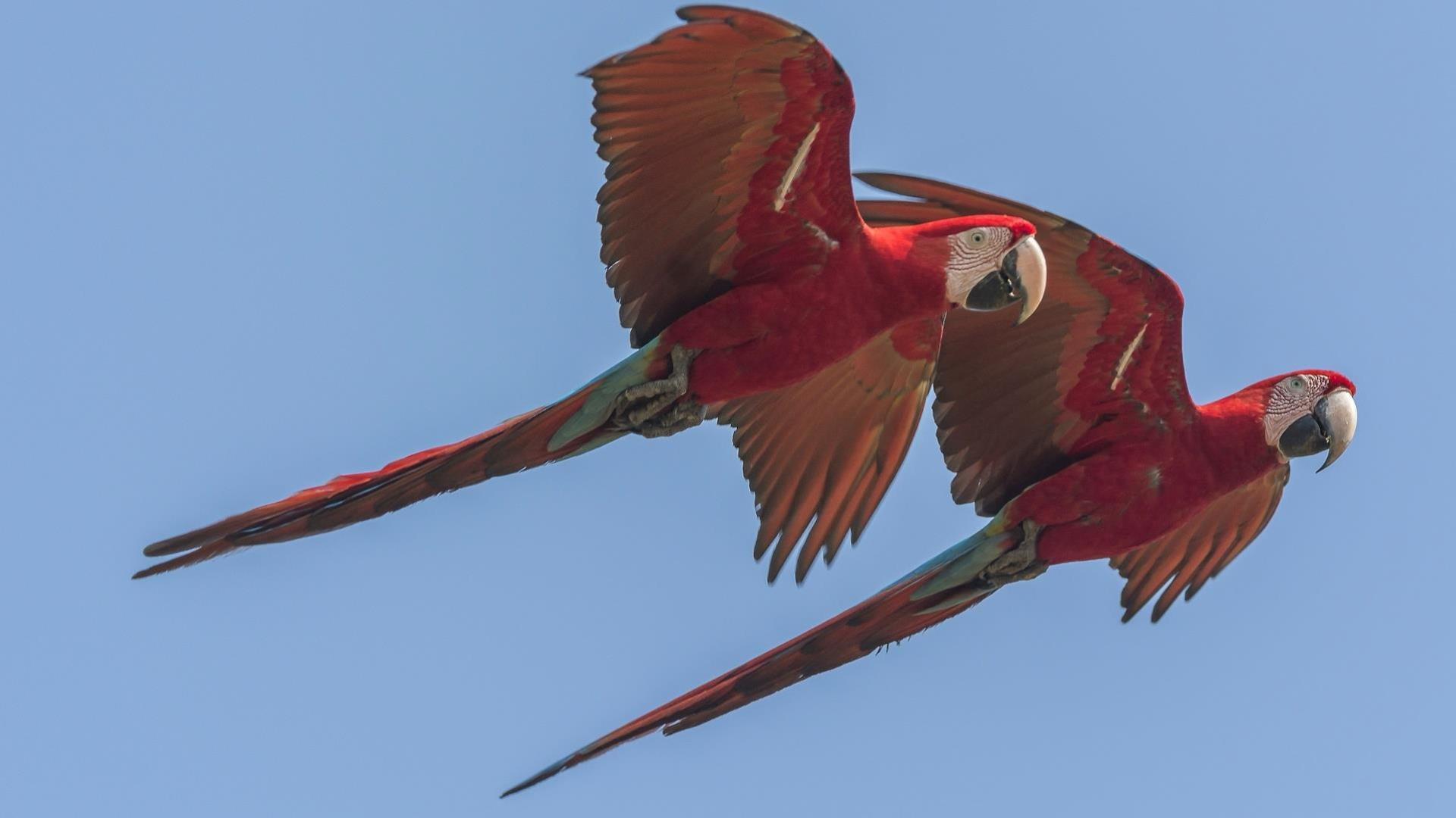 Brasilien Nord Pantanal: 6 Tage Reisebaustein - Naturparadies Pantanal: Zwei fliegende Aras