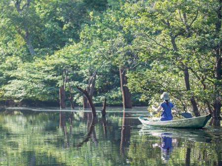 Den Amazonas per Boot vom der Anavilhanas Lodge aus erkunden