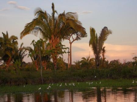 Vögel im Sonnenaufgang im Amazonas-Regenwald