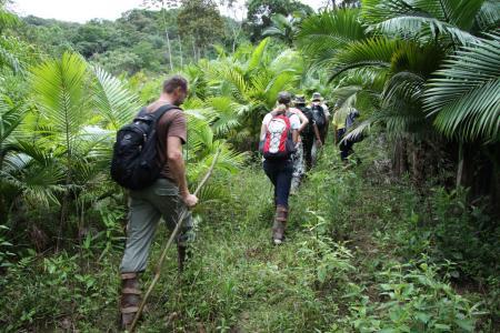 Im Atlantischen Regenwald wandern