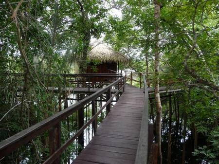 Juma Amazon Lodge Holzbrücke durch den Wald