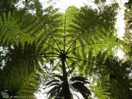 Erleben Sie die einmalige Natur des Regenwaldes auf einer Reise in Costa Rica