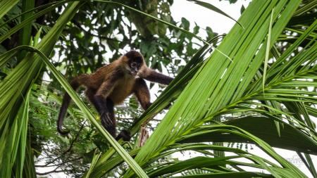 Erleben Sie die einmalige Flora und Fauna auf einer Reise nach Costa Rica