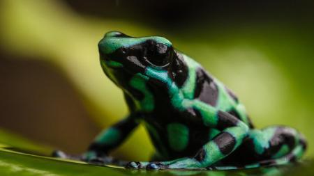 Erleben Sie die atemberaubende Tierwelt Costa Ricas auf einer Rundreise