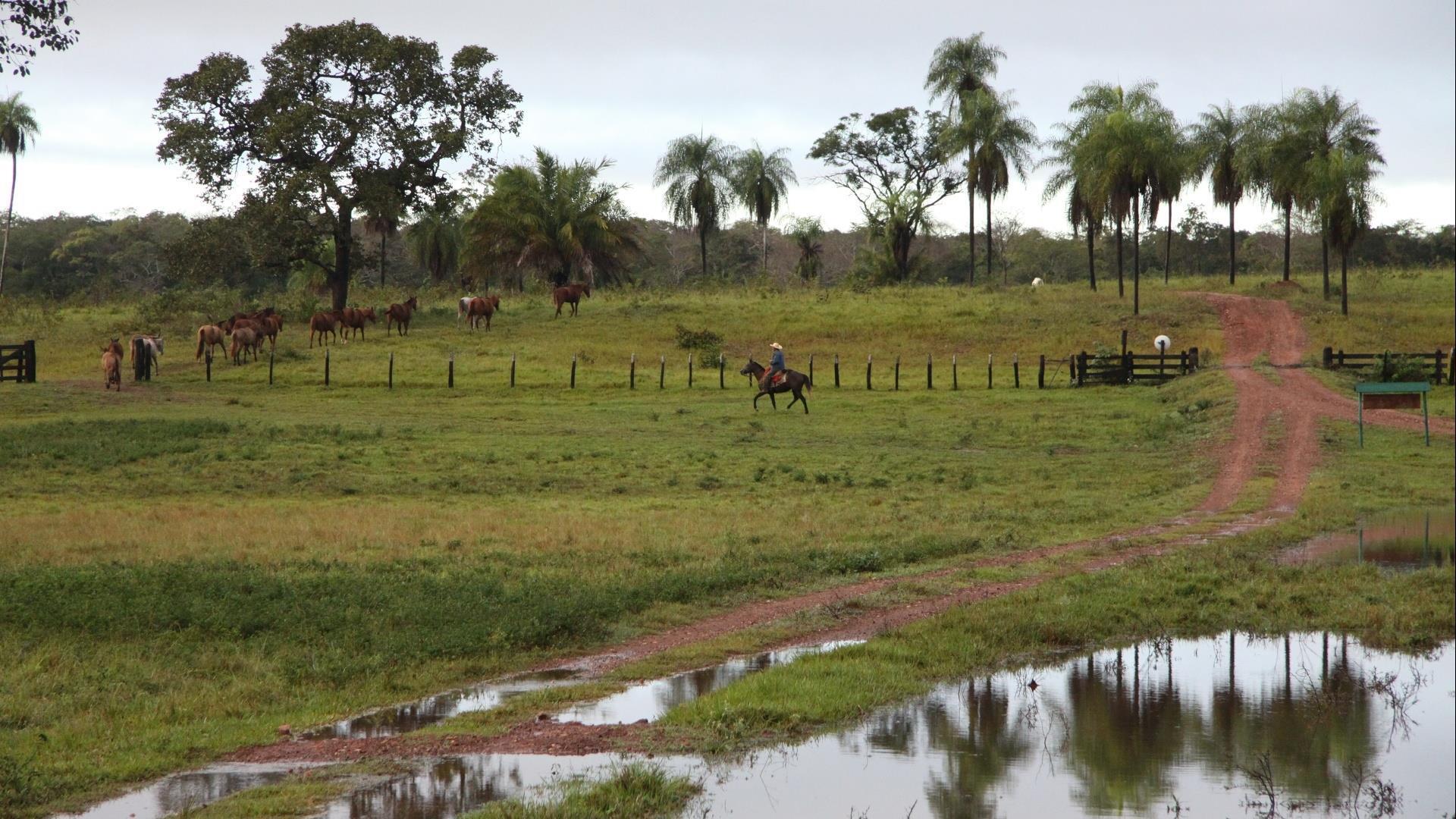 Brasilien Süd Pantanal: 5 Tage Reisebaustein - Xaraes Lodge naturnah erleben, Pferdekoppel