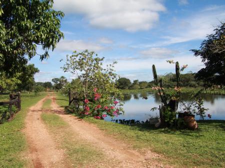 Natur pur im Süd-Pantanal