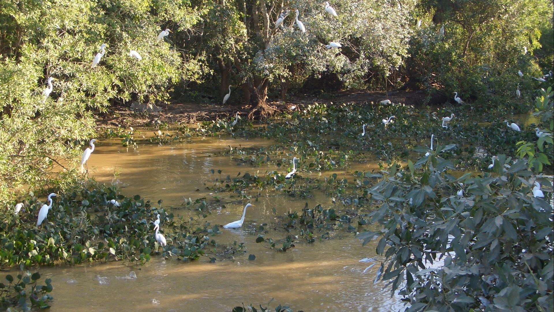 Brasilien Nord Pantanal: 4 Tage Reisebaustein - Pousada Rio Mutum Pantanal Eco Lodge naturnah erleben
