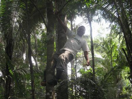 Juma Amazon Lodge Mann seilt sich von Baum ab