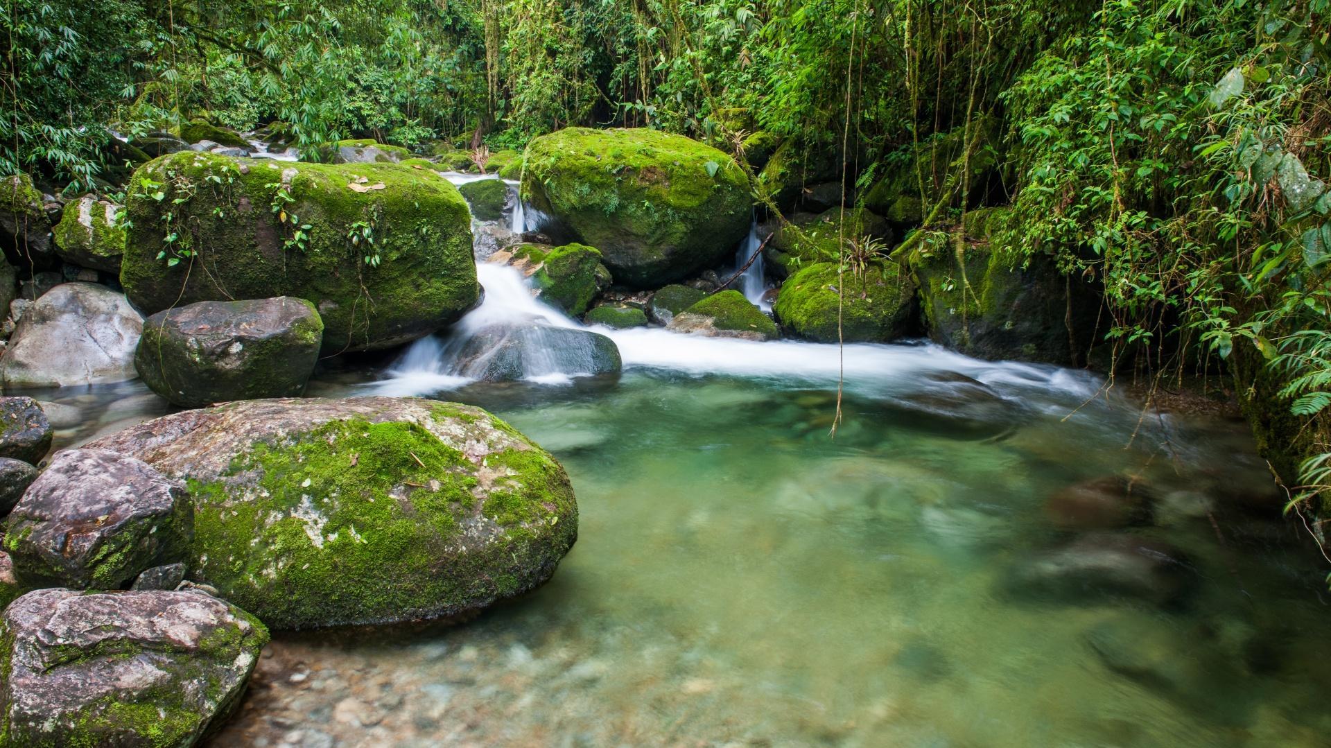 Kleiner Wasserfall im Atlantischen Regewald bei Rio de Janeiro