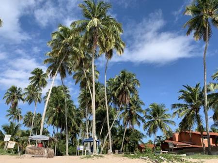 Blick auf Kokospalmen am Strand von Praia da Lage