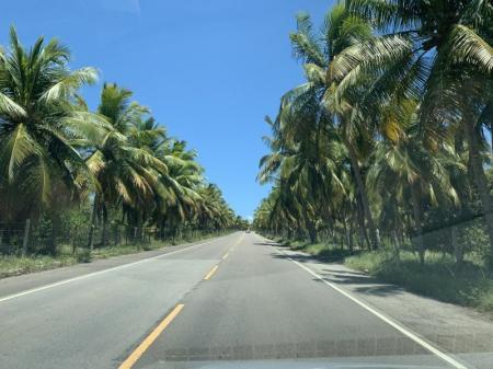Landstrasse eingesäumt von Kokospalmen entlang der Praia Gunga