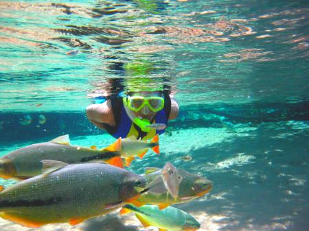 Die faszinierende Unterwasserwelt des Süd-Pantanals