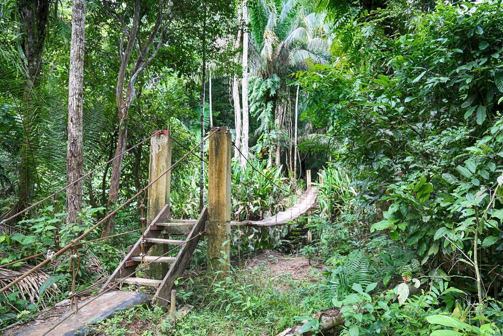 Entdecken Sie den dichten Amazonas Regenwald Perus in der Corto Maltes Amazonia Lodge