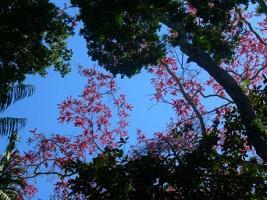 Peru Reise Amazonas Himmel