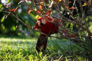 Peru Reise Amazonas Papagei
