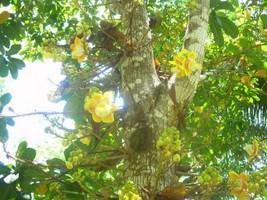Peru Reise Amazonas Pflanze