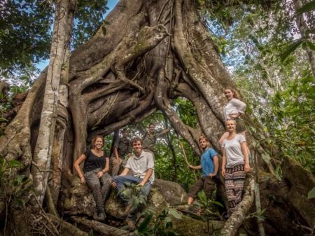 Baumriese Atlantischer Regenwald