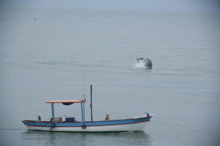 Delfin in Laguna