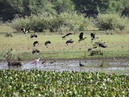 Vögel im Pantanal