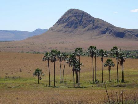 Baumgruppe vor Hügel im Parque da Maytrea